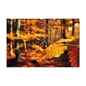 Fotoobraz Barvy podzimu I, 90x60 cm