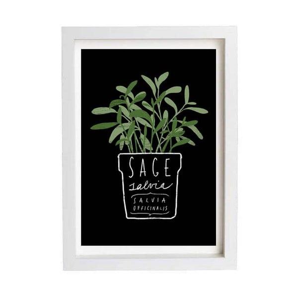 Plakát Sage Salvia Herb