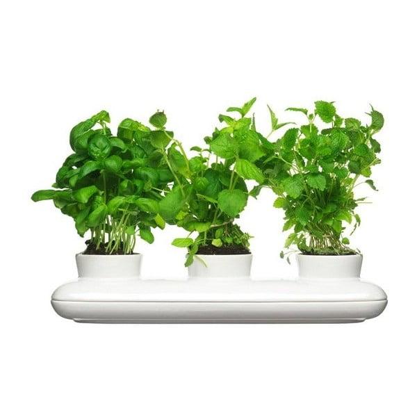 Ghiveci din porțelan pentru plante Sagaform Trio Herb
