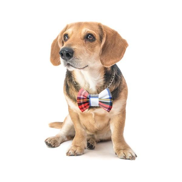 Barevný károvaný charitativní psí motýlek Funky Dog Bow Ties, vel. S