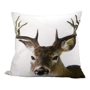 Polštář Deer 50x50 cm