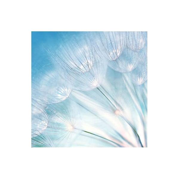 Obraz na skle Chmýří, 50x50 cm