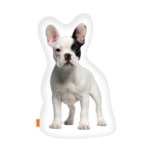 Polštář French Bulldog, 40x30 cm