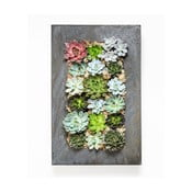 Nástěnný květináč se sukulenty Urban Botanist Wall, 72x45 cm