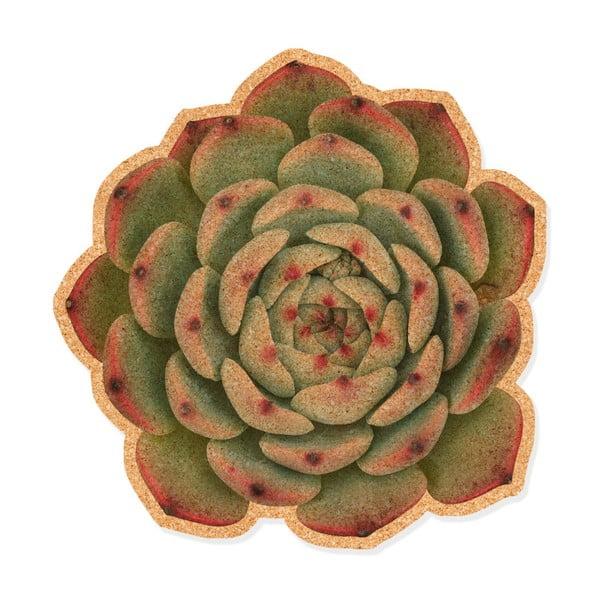 Suculenta dekoratív parafatábla - Really Nice Things