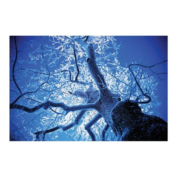 Fotoobraz Omrzlý strom, 90x60 cm