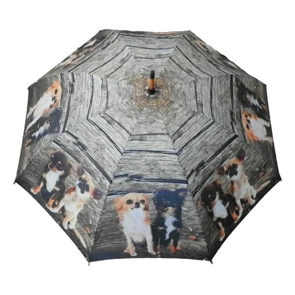 Deštník Chihuahua Family