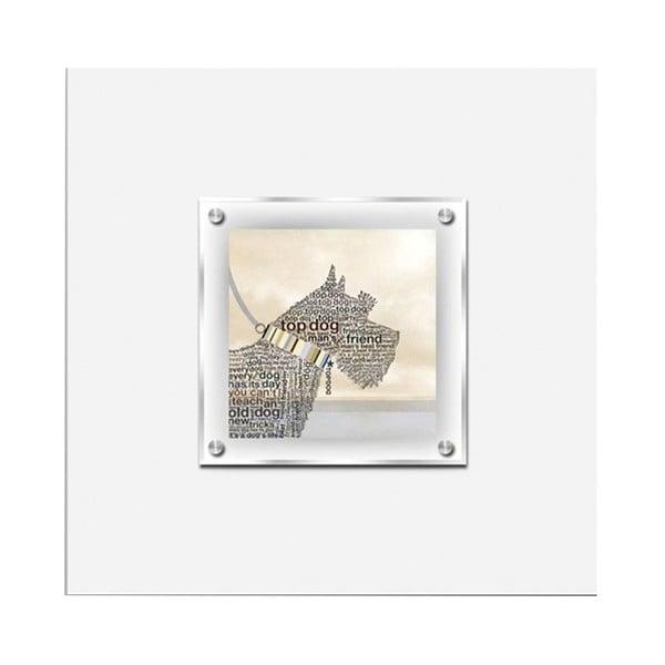 Obraz Scottie Dog, 50x50 cm