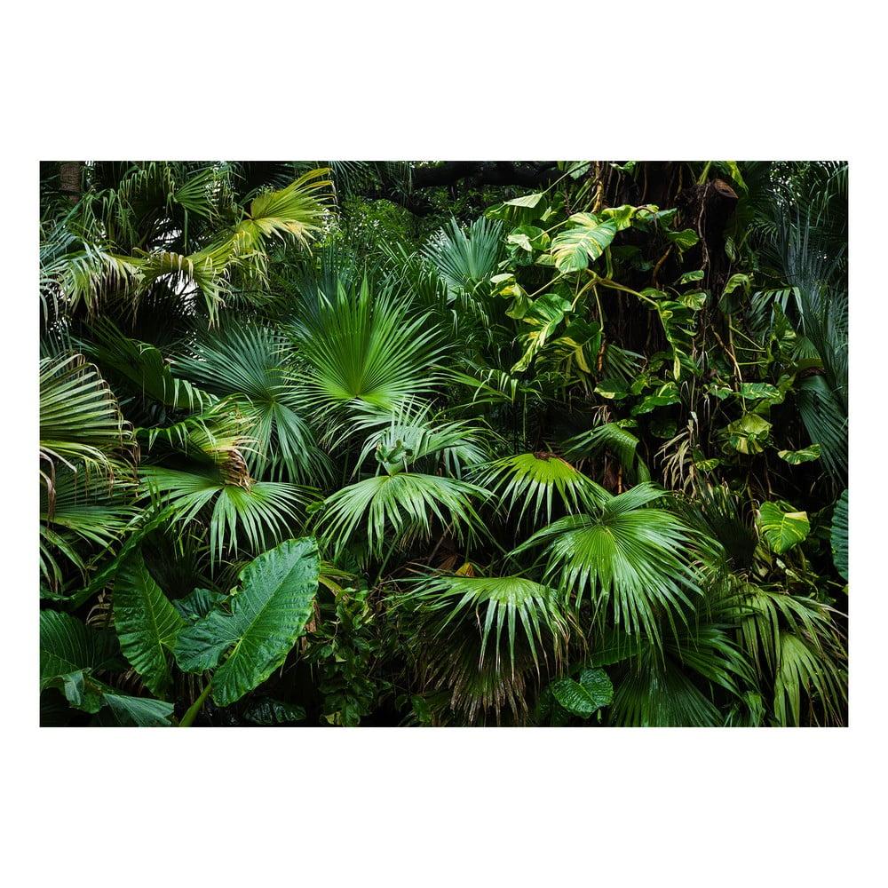 Velkoformátová tapeta Bimago Sunny Jungle, 400x280cm