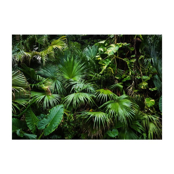 Wielkoformatowa tapeta Bimago Sunny Jungle, 400x280 cm