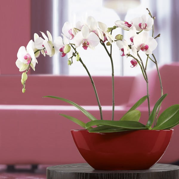 Oválny květináč 42 cm, červený