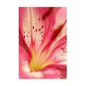 Fotoobraz Růžovožlutý květ, 40x60 cm, exkluzivní edice