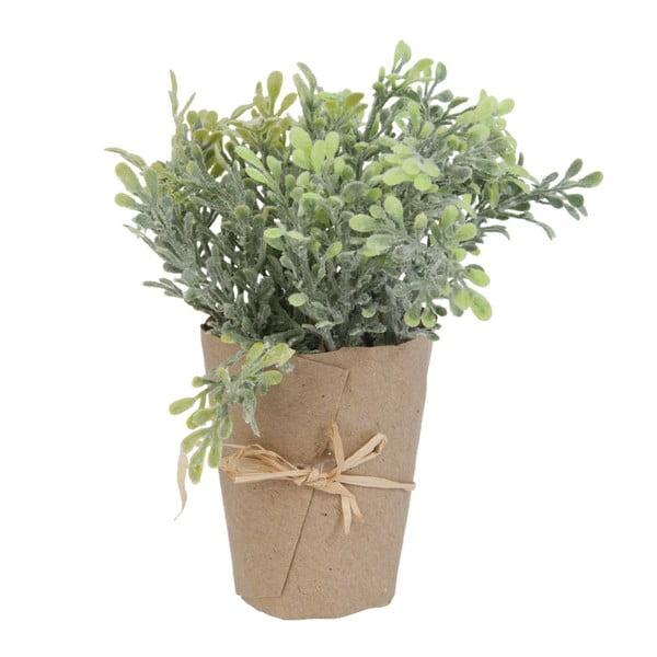 Dekorativní květina Plant