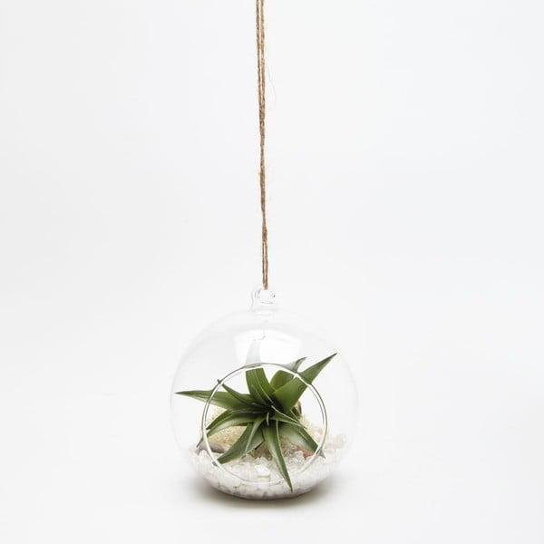 Závěsné terárium s rostlinami Urban Botanist Globe Mini