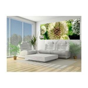 Velkoformátová nástěnná tapeta Vavex Dandelion, 250 x 104 cm