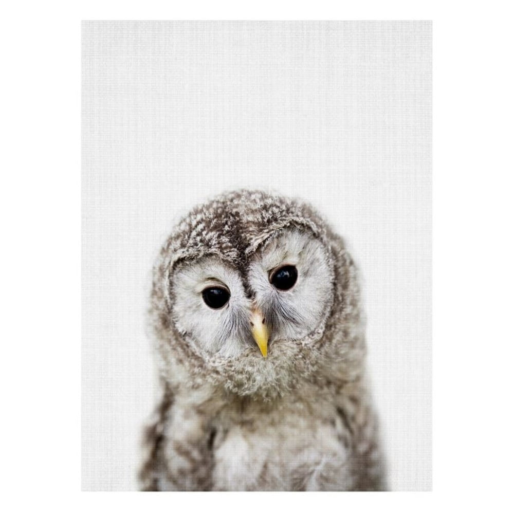 Plakát Blue-Shaker Baby Animals Owl, 30 x 40 cm