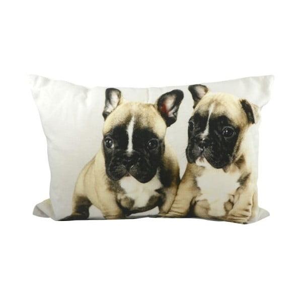 Polštář Mars&More French Bulldog Puppies, 50x35 cm