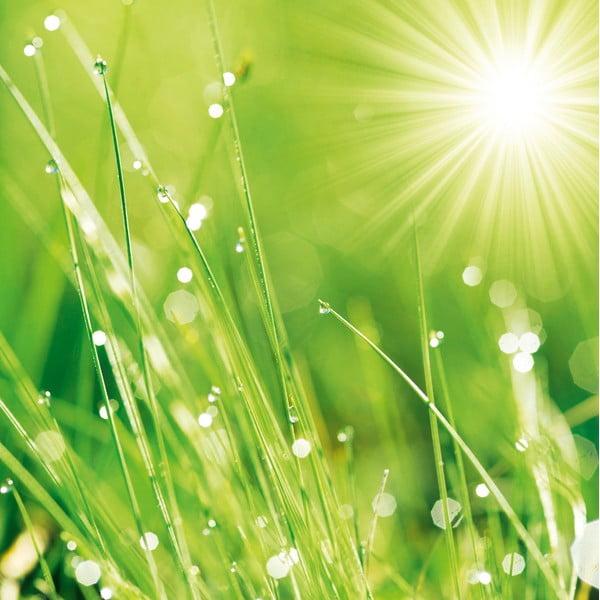 Skleněný obraz Lush Morning Grass, 30x30 cm