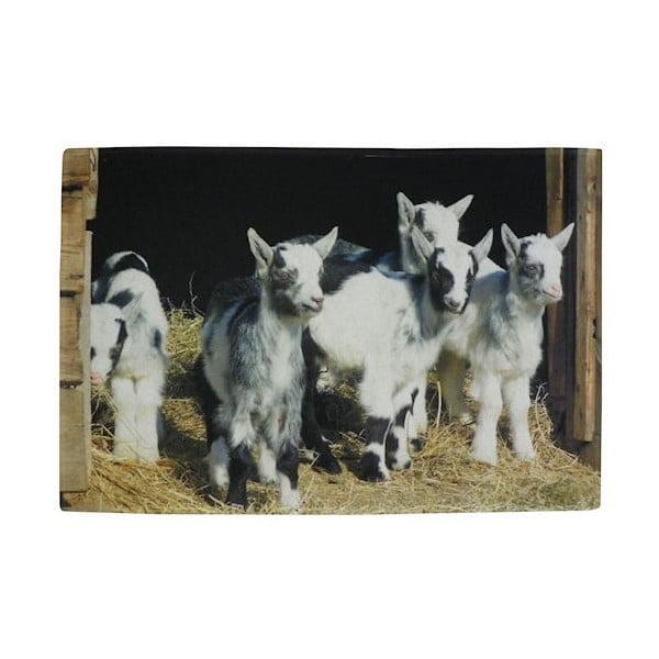 Předložka Dwarf Goats 75x50 cm