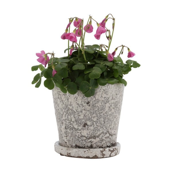 Šedý terakotový květináč A Simple Mess, ⌀16cm