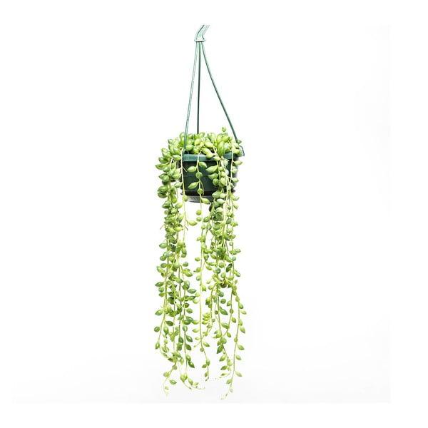 Závěsný květináč s rostlinou Urban Botanist String of Peas