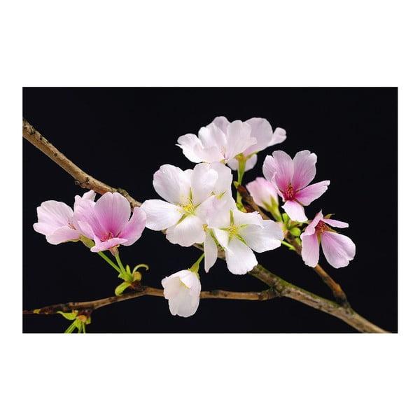 Maxi plakát Cherry Blossoms, 175x115 cm