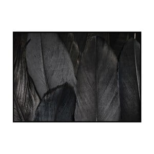 Poster DecoKing Feathers Black, 70 x 50 cm
