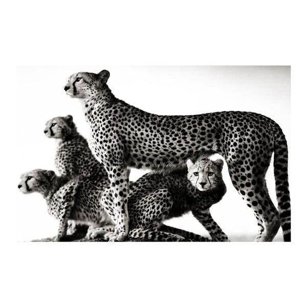 Obraz Black&White Wildness,45x70cm