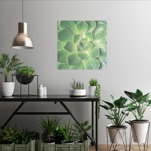 Skleněný obraz OrangeWallz Botanic, 40 x 50 cm