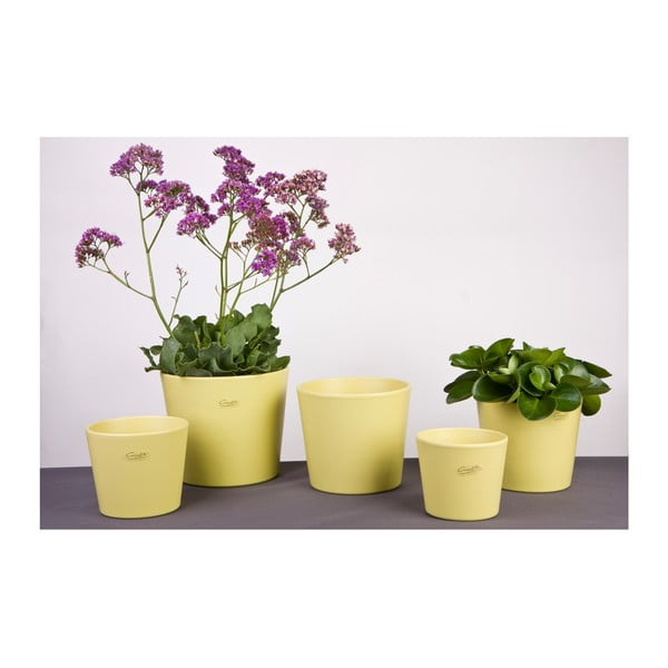 Sada 2 zelených květináčů Matt, 13 cm