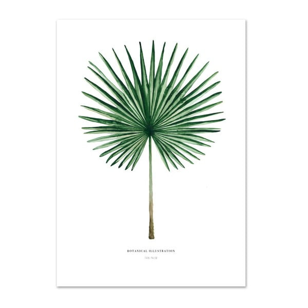 Plakát Leou La Douce Fan Palm, 42 x 59,4 cm