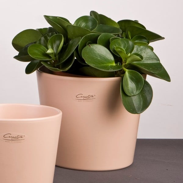 Sada 2 kávových květináčů Matt, 19 cm