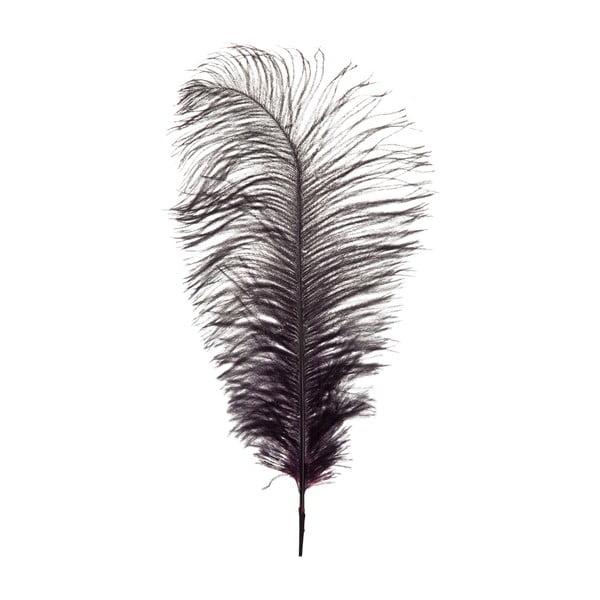 Dekorativní pštrosí peří Aubergine, výška 35 cm