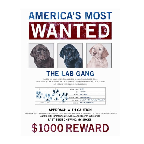 Plechová cedule Most Wanted