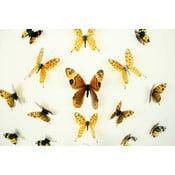 Set 18 autocolante cu efect 3D Fanastick Butterflies Yellow