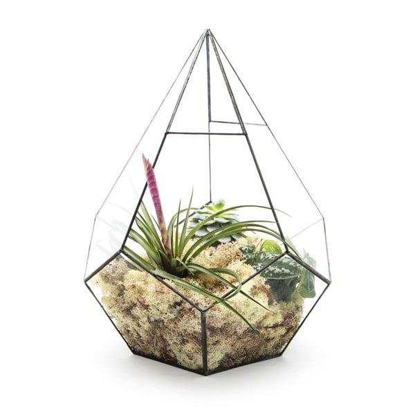 Terárium s rostlinami Urban Botanist Super Aztec Prims, tmavý rám
