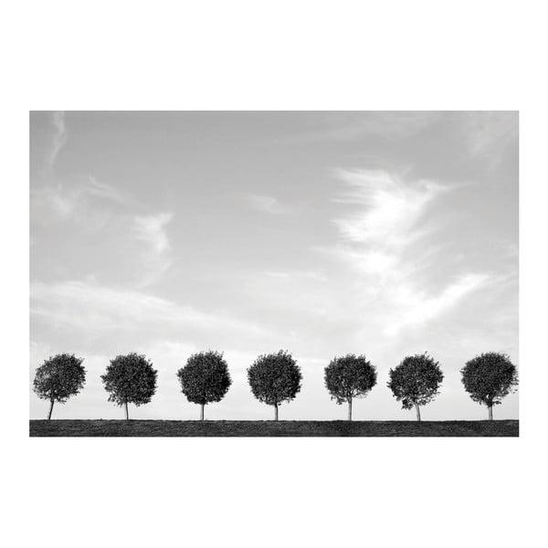 Fotoobraz Stromy u cesty, 90x60 cm