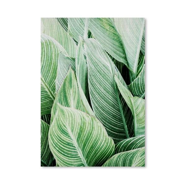 Plakát Tropical Leaves
