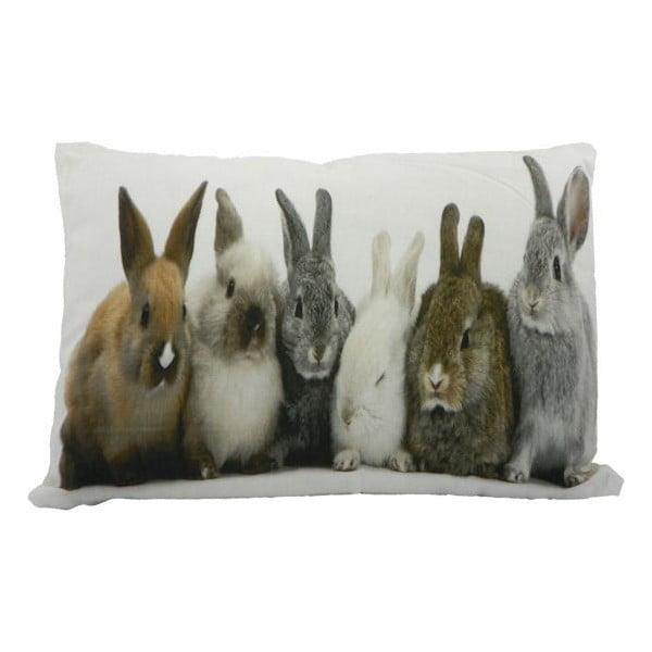 Polštář Rabbits 50x35 cm