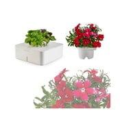 Startovací květináč Bazalka + náhradní kazeta Hvozdík čínský