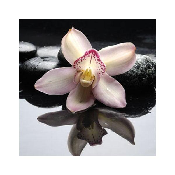 Obraz na skle Orchidej Zen II, 50x50 cm