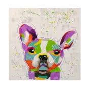 Obraz na plátně Bulldog, 80x80 cm