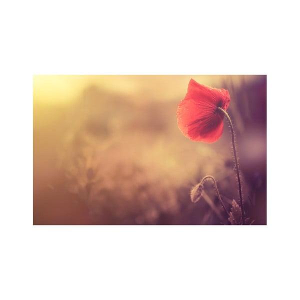 Obraz Makový květ, 45x70 cm