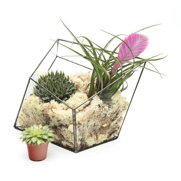 Terárium s rostlinami Urban Botanist Super Aztec Diamond, tmavý rám