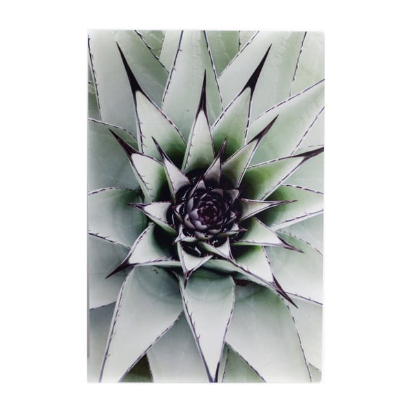 Nástenný obraz Velvet Atelier Ditma, 40×60cm