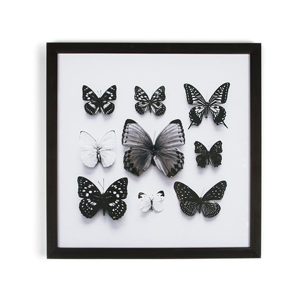 Tablou cu ramă Graham & Brown Butterfly Studies, 50 x 50 cm