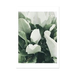 Plakát HF Living Botanic Thorn, 21 x 30 cm