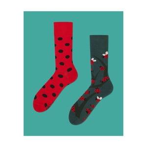 Ponožky Many Mornings Dots and Bugs, vel. 39/42