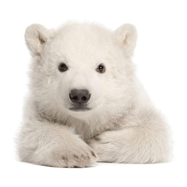 Nástenná samolepka Dekornik Polar Bear, 58 x 55 cm