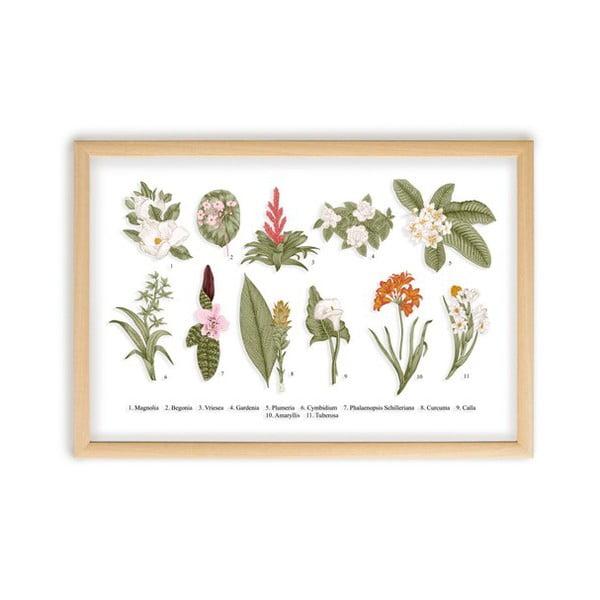 Obraz s rámem z borovicového dřeva Surdic Botanical Flowers, 50 x 70 cm